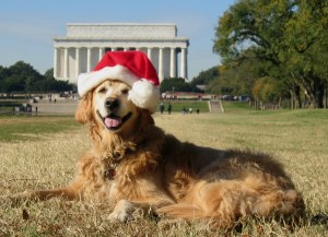 DC holiday greetings