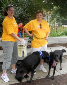 Dogma walkers with Labs
