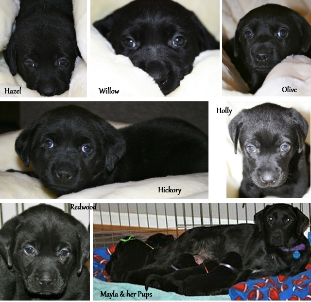 Lab Rescue gets $50K Pepsi grant | Two Dog Tales