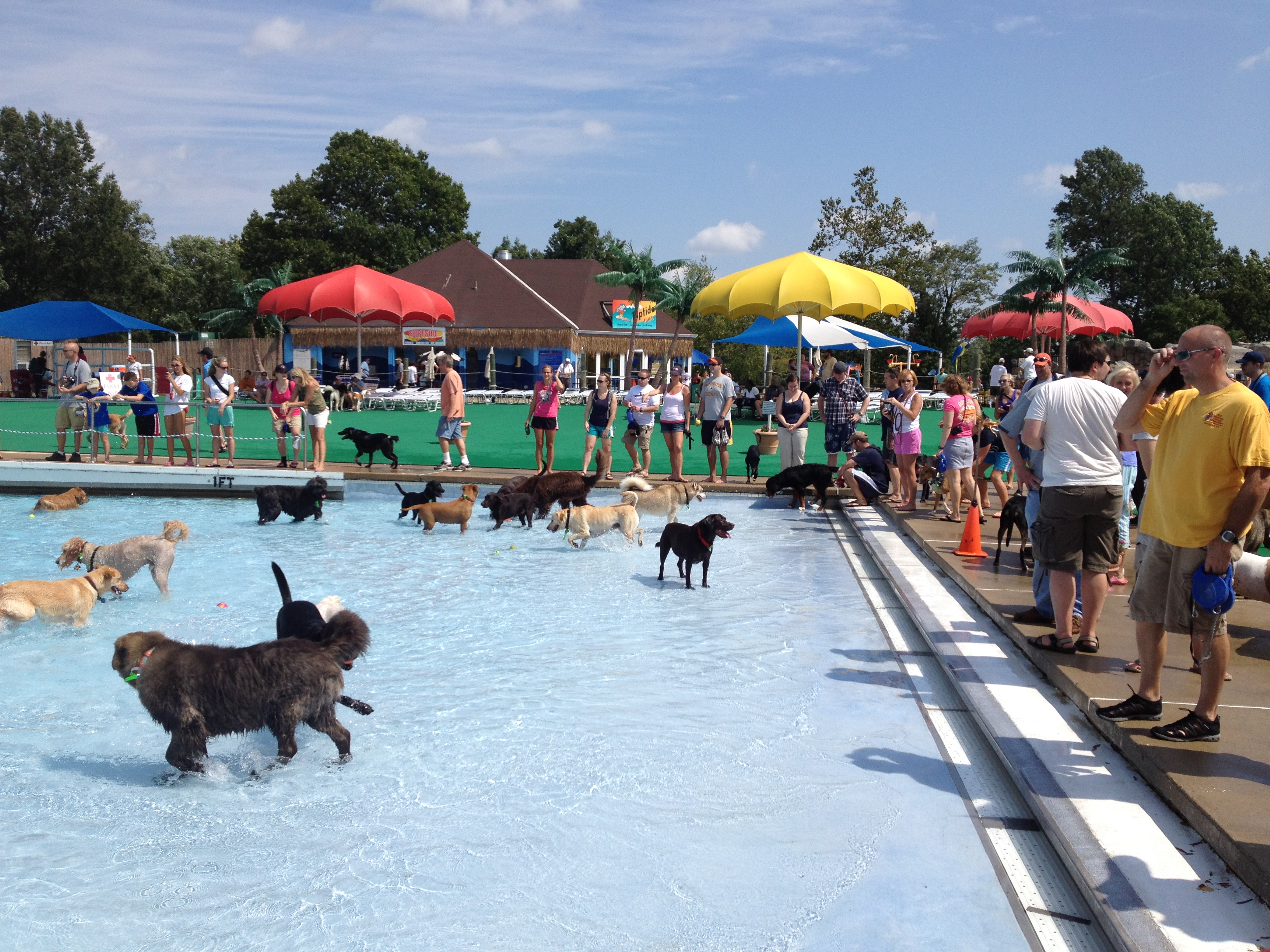 Dowden terrace dog swim sept 15 pictures from great waves two dog tales Swimming pools in alexandria va