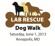lab rescue walk