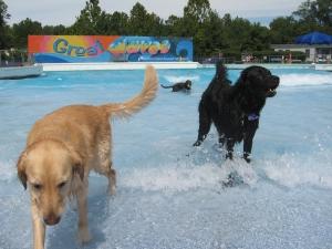 GW Dog Dip 004
