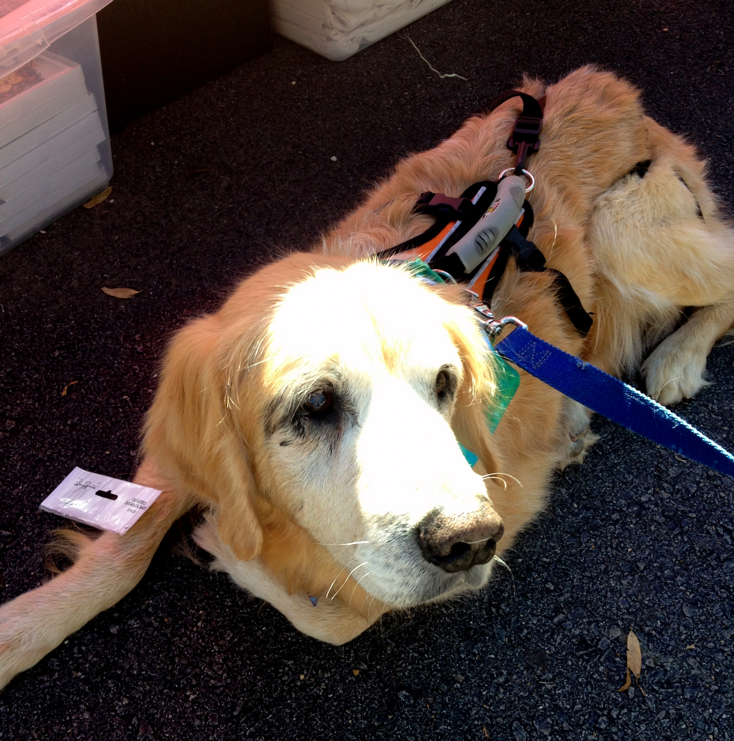Chatham Area Rescue Education Dogs
