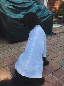 black dog wearing white shirt with zipper up the back