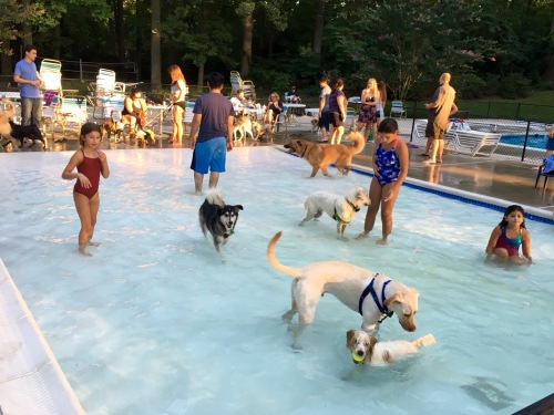 dogs playing in shallow wading pool  with children