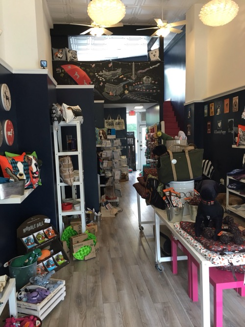 dog boutique shop floor displays